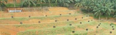 Tanah pertanian tanaman durian untuk dijual,Muar