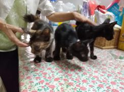 Kitten To Be Given Away Free