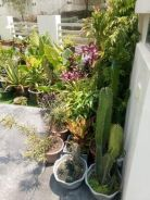 Home Plants For sale