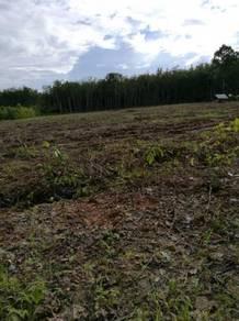 Tanah Untuk Dijual - Pendang Mukim Rambai