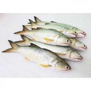 PULAU KETAM SENANGIN / MAYOU FISH (顺丰)