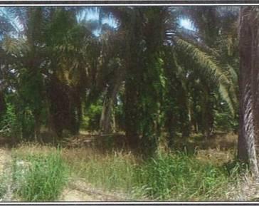 Agricultural Land in Ladang Sitiawan, Off Jalan Lumut, Sitiawan, Perak