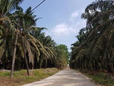 8 acres/400m from main road/TNB SAJ /Flat land/freehold/kota tinggi