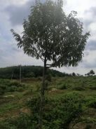 Simpang Empat , FREEHOLD agriculture land for sale