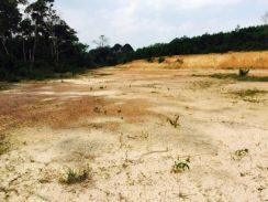 Agriculture land in bukit katil melaka