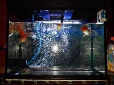 Aquarium 2 kaki