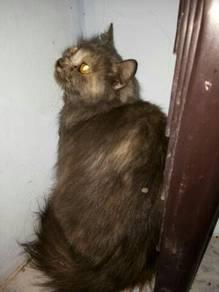 Kucing dlh