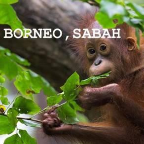 Holiday at Sabah!