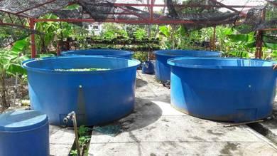 Tong/kolam/tangki fiber biru untuk ikan/udang