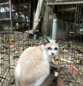 Kucing Betina 6bulan