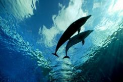 AMI Travel l 3D2N Discover Bali Dolphin