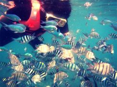 AMI Travel | 4D3N Snorkeling Package Pulau Tinggi