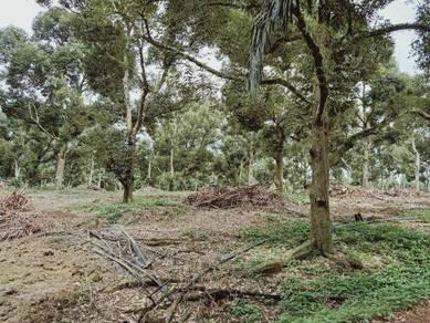 Durian FREEHOLD 17 acres at Selandar, Batang Melaka, Machap, Jasin, Me