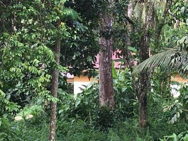 Batang Pokok Durian