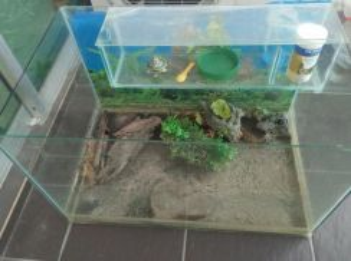 2 aquarium