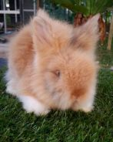 Teddybear rabbit