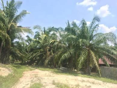 Oil Palm Plantations Land At Gemas, Negeri Sembilan