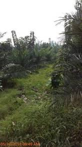Tanah sawit untuk di jual segamat