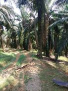 Jasin, FREEHOLD Agriculture land for sale