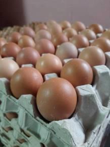 Telur merah murah