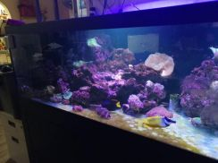 Saltware fishes, Tanks, Corals, Full System FS