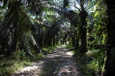 Palm oil and rubber estate for sale at titi, jelebu