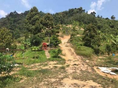 Bentong Lebu 8 Acres Land Durian Musang King Highway Near