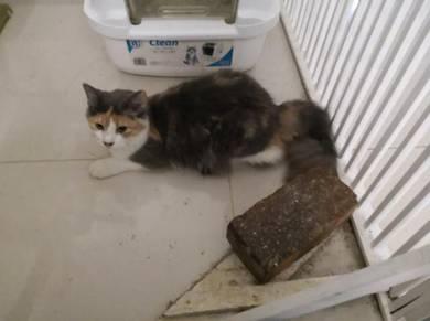 Glitter, a female 6 months old kitten