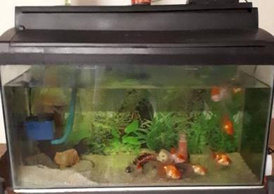 2.5 feet Aquarium