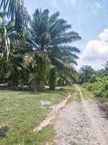 7.8 acres/freehold/below bank value/Kota Tinggi