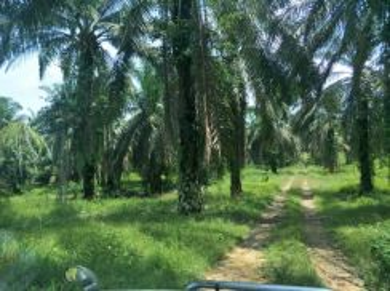 4 acres/Reserved Tar Road/TNB SAJ/Freehold/Fencing Gates/Kota Tinggi