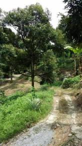 Dusun Durian Musang King Raub