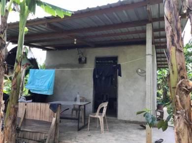 4.5acre, durian orchard, Benta, pahang, musang king (BESIDE MAINROAD)