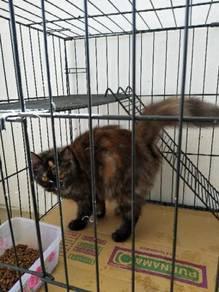 Kucing betina mengandung utk dilepaskan