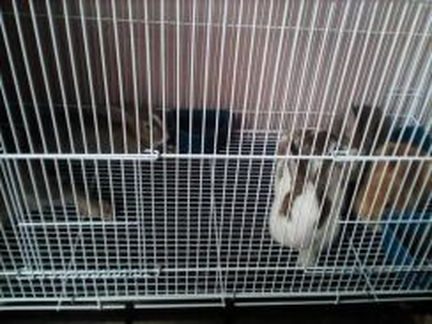 Rabbit Arnab