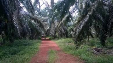 Batang Berjuntai, Bestari Jaya Land