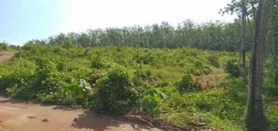 Tanah Cantik Untuk Segala Pertanian Strategik!!!