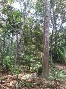 Dusun Buah