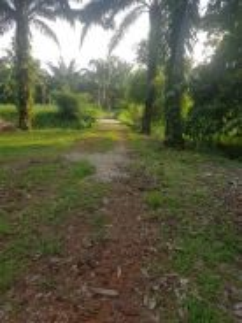 4.8 acres/TNB SAJ/freehold/2 titles/Benut/Pontian