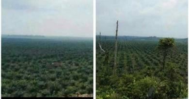 Tanah Kelapa Sawit 6000 ekar Pekan Pahang