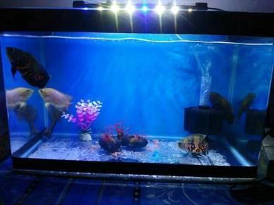 Ikan oscar/oscar fish&pump; filter
