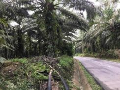 Road Side Palm Oil Land Sale!! 1.5 km from Sg.Klau