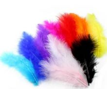 Colours feather