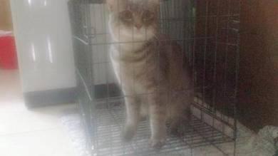 Kucing parsi+dlh