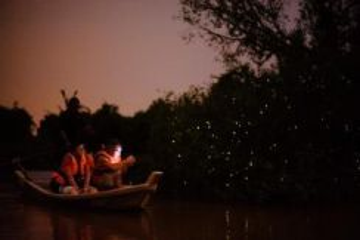 Amazing Kuala Selangor Fireflies Tour | AMI Travel