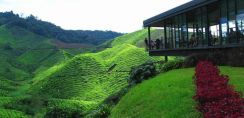 Full Day Cameron Highlands Tour | AMI Travel