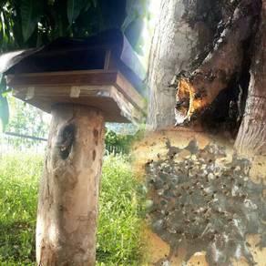 Sarang lebah kelulut