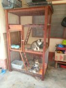 Sangkar besar / extra large cage