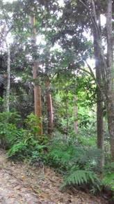 Tanah Dusun Tampin