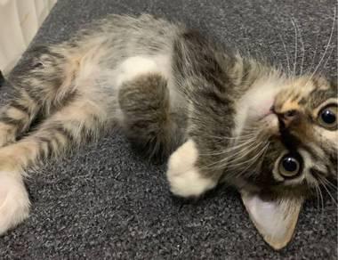Kucing free